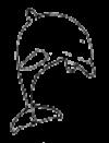 dolphin_jump_logo